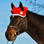 A Story of Christmas on the Farm